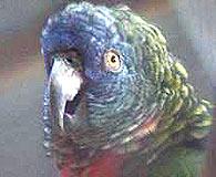 صور  جميلة  للببغاء Parrots_sm_03